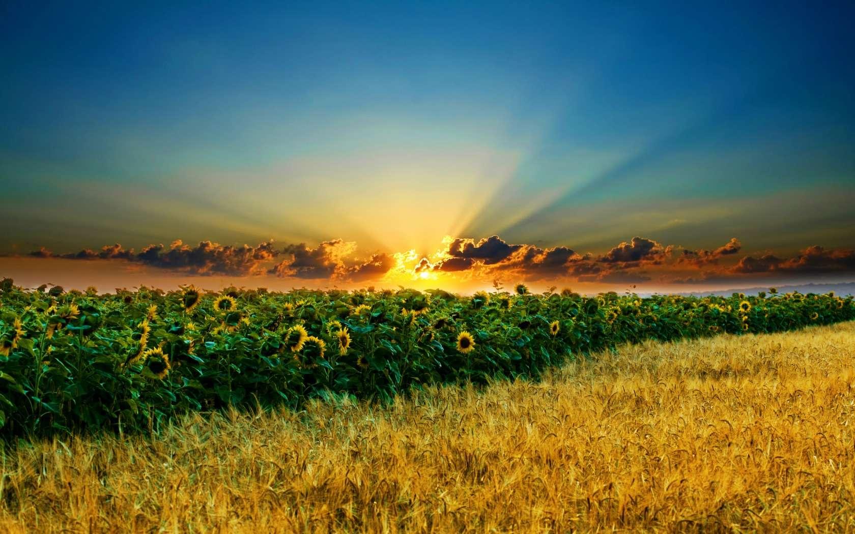 http://img542.imageshack.us/img542/301/imagenesskamaslecom24.jpg