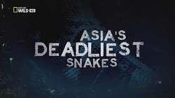 Những Loài Rắn Nguy Hiểm Nhất Châu Á